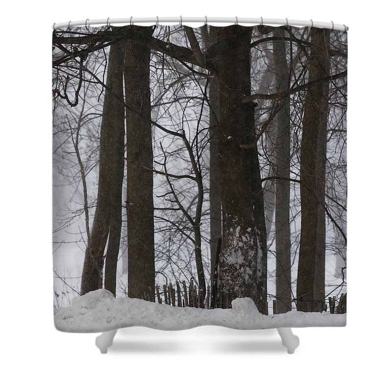 Woods Shower Curtain featuring the photograph Gentle Giants by Linda Shafer