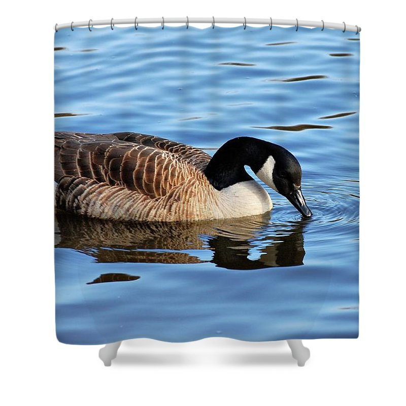 Birds Shower Curtain featuring the photograph Gentle Touch by Angie Tirado