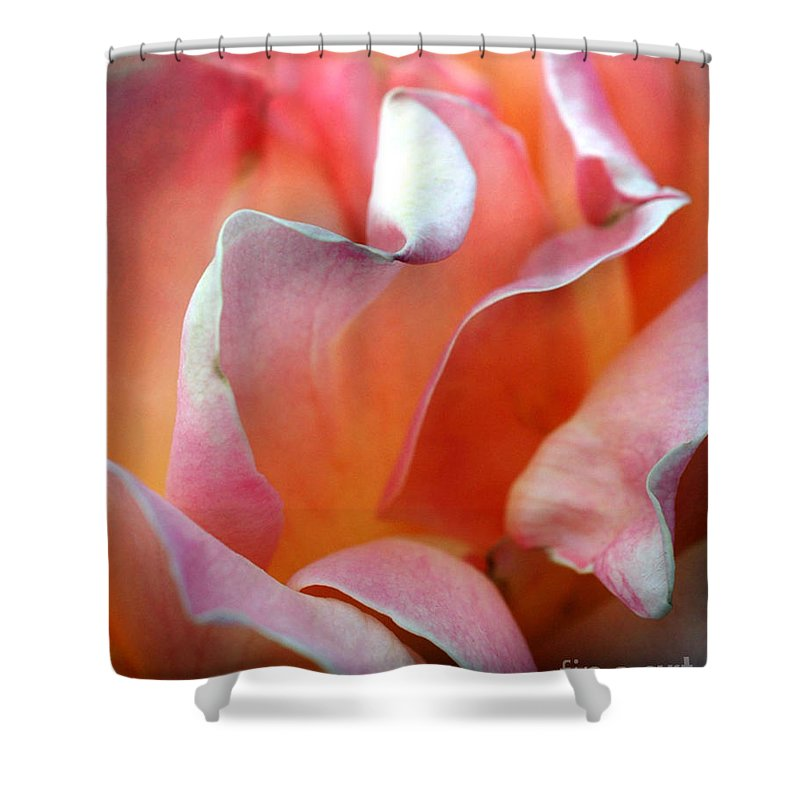 Flowers Shower Curtain featuring the photograph Georgias Rose by Norman Andrus