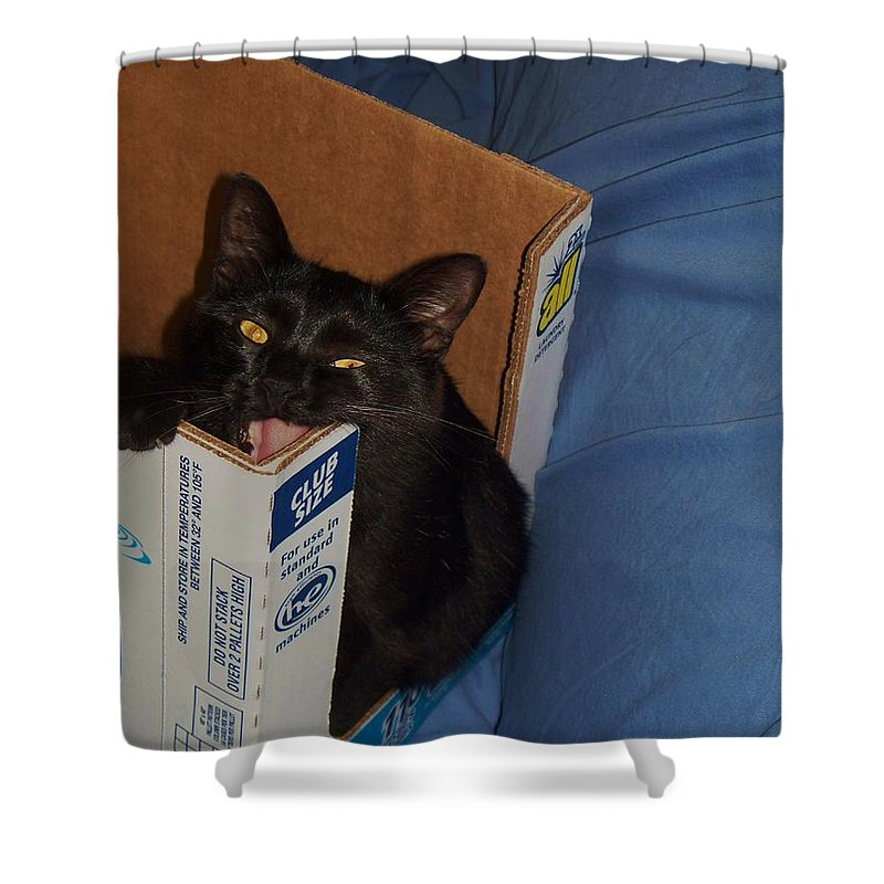Cat Shower Curtain featuring the photograph Gepptto The Cat by Eric Schiabor
