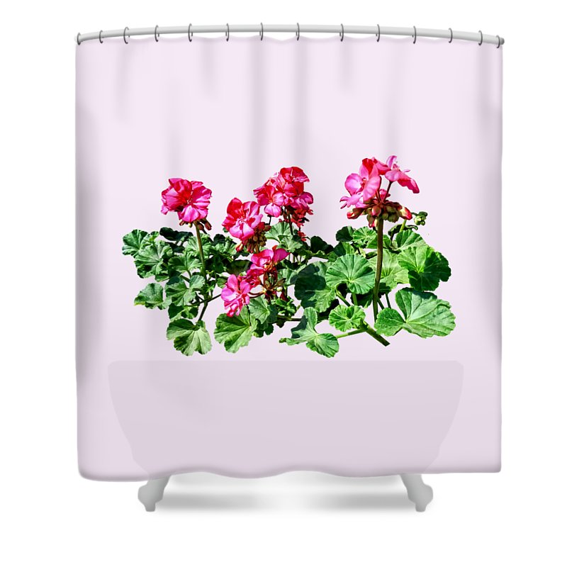 Geraniums Shower Curtain featuring the photograph Geraniums In A Row by Susan Savad