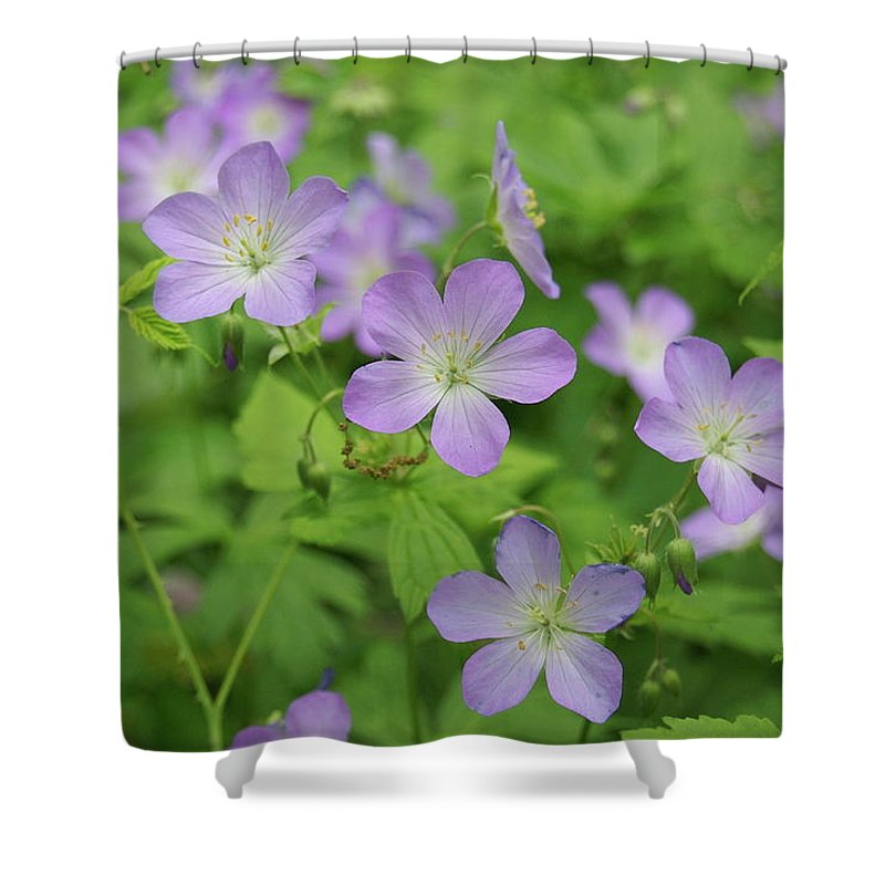 Flowers Shower Curtain featuring the photograph Geraniums Spring Wildflowers by Michael Peychich