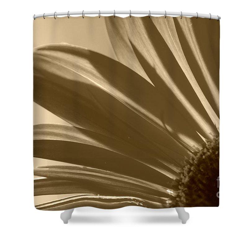 Gerber Daisy Shower Curtain featuring the photograph Gerber Flower by Donna Bentley