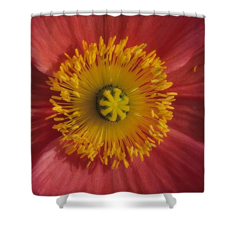 Gerber Daisy Shower Curtain featuring the photograph Gerber Greetings by Laurie Paci