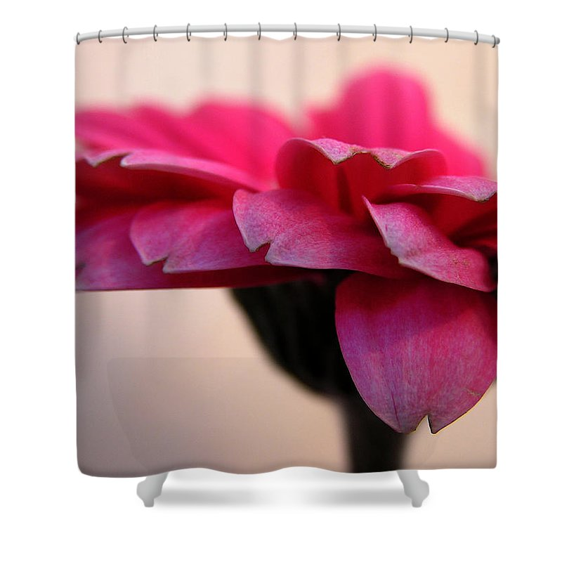 Pink Flower Shower Curtain featuring the photograph Gerbera Daisy by Carol Milisen