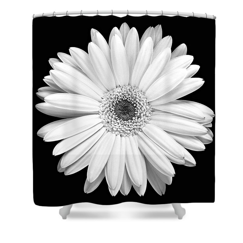 Gerber Shower Curtain featuring the photograph Single Gerbera Daisy by Marilyn Hunt