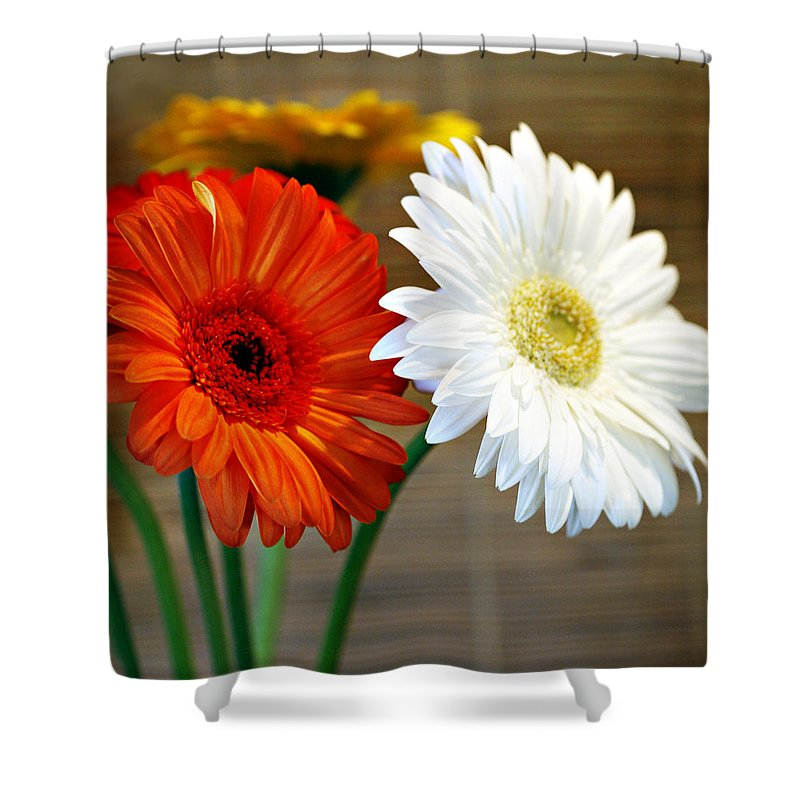 Flower Shower Curtain featuring the photograph Gerbers by Marilyn Hunt