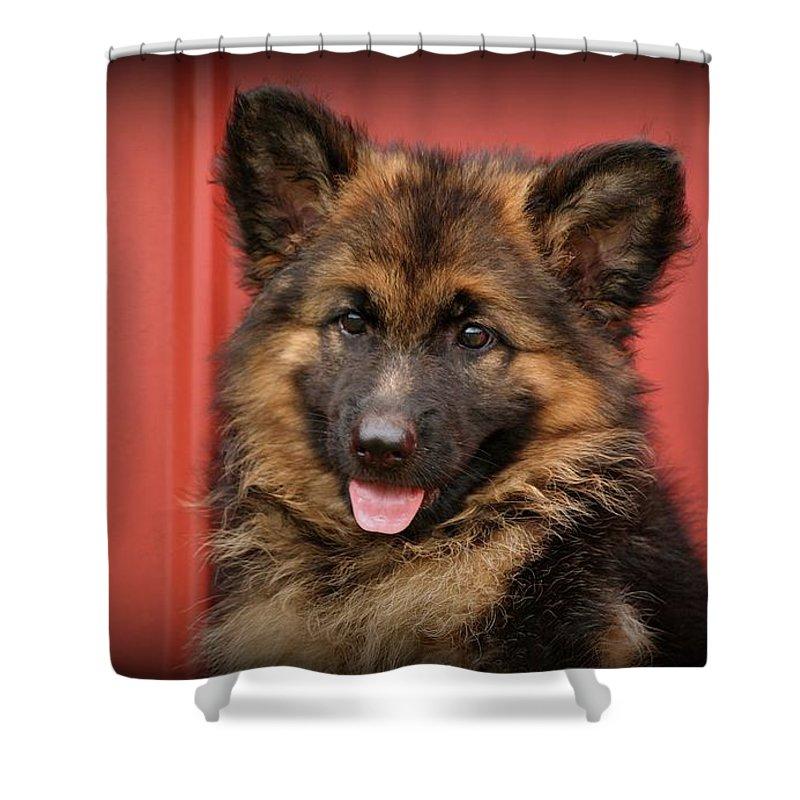 German Shepherd Shower Curtain featuring the photograph German Shepherd Puppy - Queena by Sandy Keeton