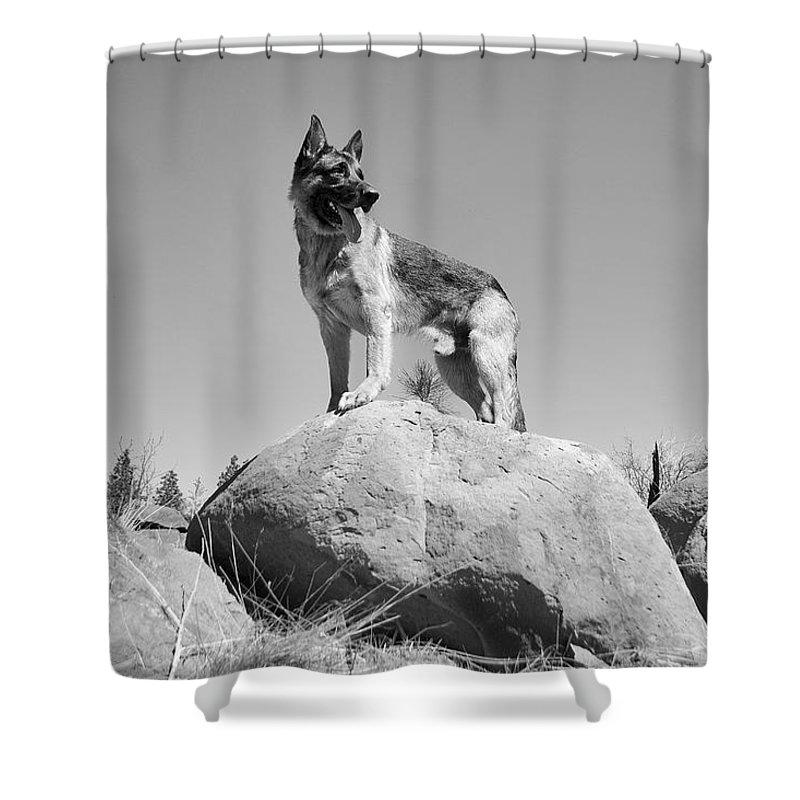 German Shepherd Shower Curtain featuring the photograph German Shepherd by Sagittarius Viking
