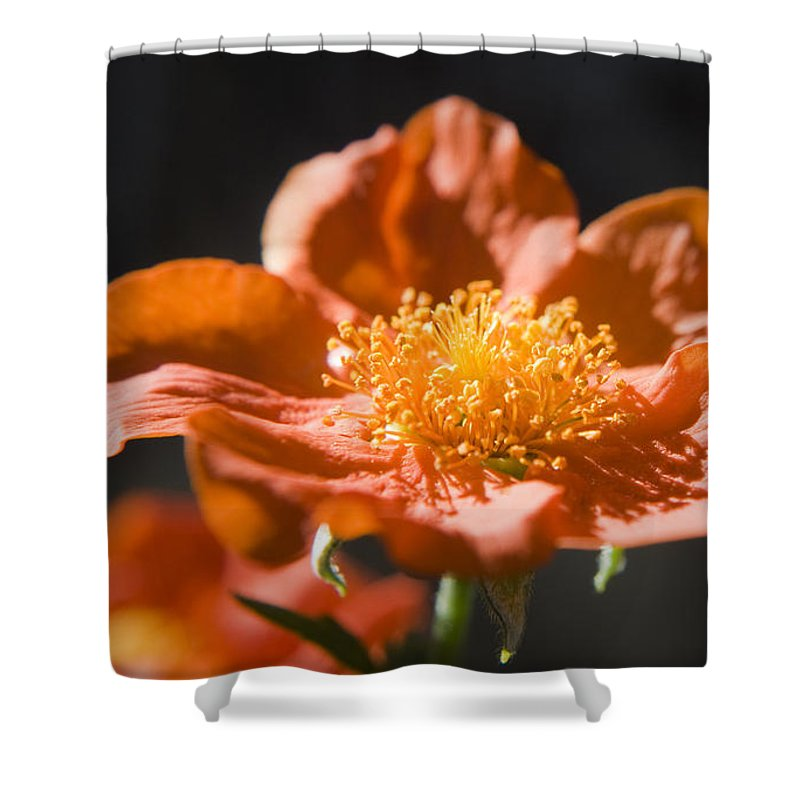 Geum Shower Curtain featuring the photograph Geum Scarlet Avens by Teresa Mucha