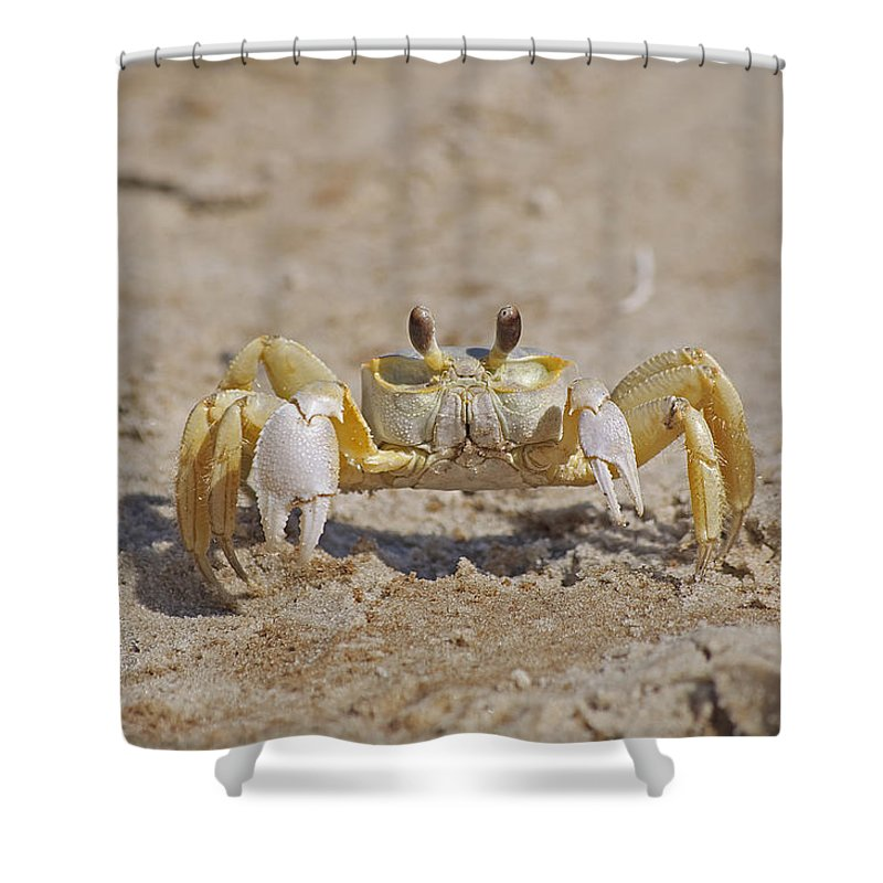 Crab Shower Curtain featuring the photograph Ghost Crab by Kenneth Albin