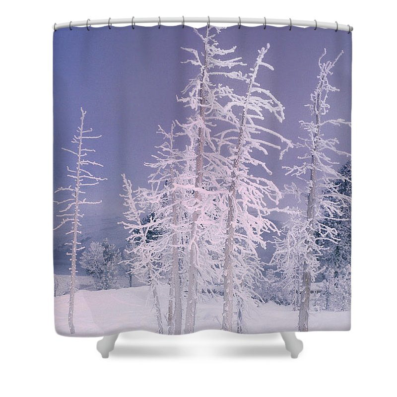 North America Shower Curtain featuring the photograph Ghost Trees Yellowstone National Park by Dave Welling