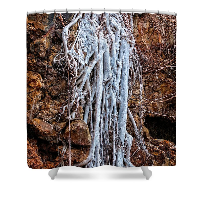 Roots Shower Curtain featuring the photograph Ghostly Roots by Christopher Holmes