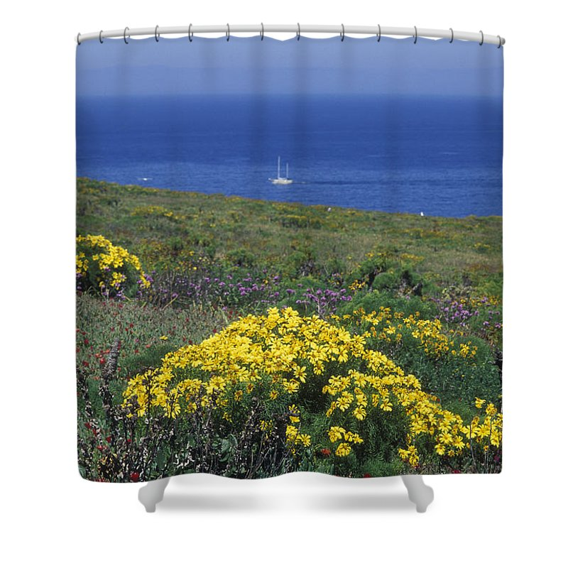 Landscapes Shower Curtain featuring the photograph Giant Coeropsis, Blue Dicks And Ice by Rich Reid