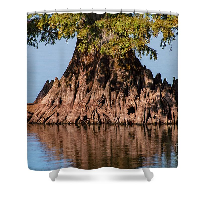 Reelfoot Lake State Park Shower Curtain featuring the photograph Giant Cypress Tree In Reelfoot Lake by Bob Phillips