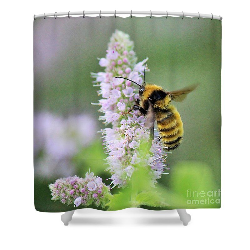 Bumble Bee Shower Curtain Featuring The Photograph Giant Fuzzy Bumble Bee  On Mint By Colleen Snow