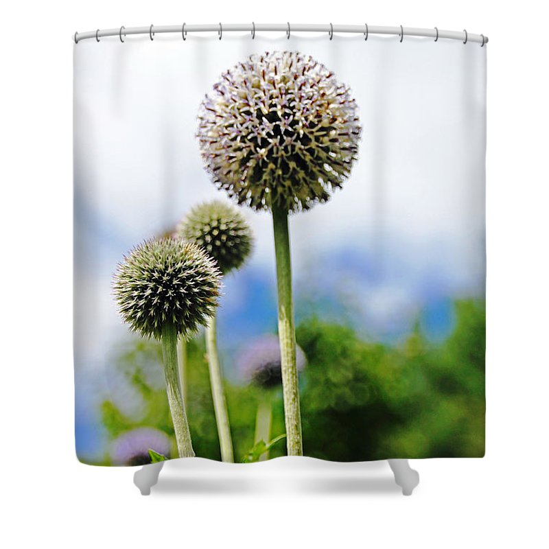 Giant Globe Thistle Shower Curtain featuring the photograph Giant Globe Thistle by Debbie Oppermann