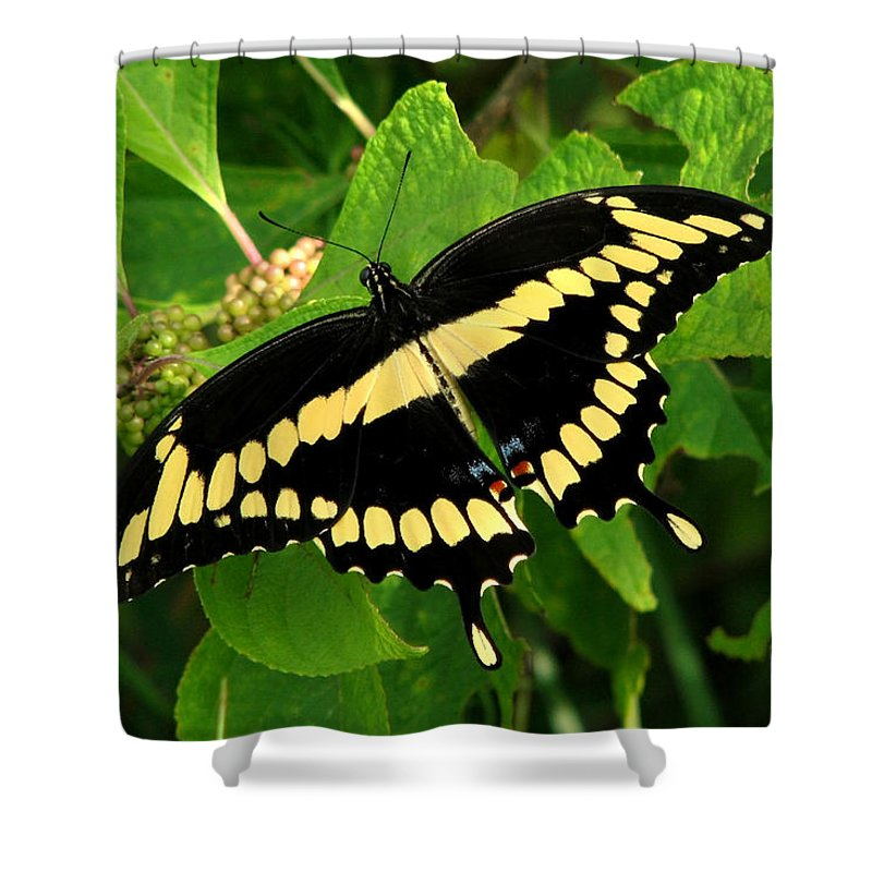 Nature Shower Curtain featuring the photograph Giant by Peg Urban