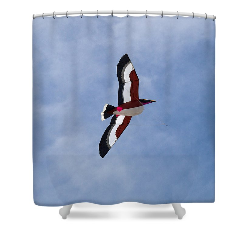 Pelican; Kite; Giant; Soaring; Fly; Flying; Spring; Break; Fesival; Fest; Kitefest; Florida; Melbour Shower Curtain featuring the photograph Giant Pelican Searching For Prey by Allan Hughes