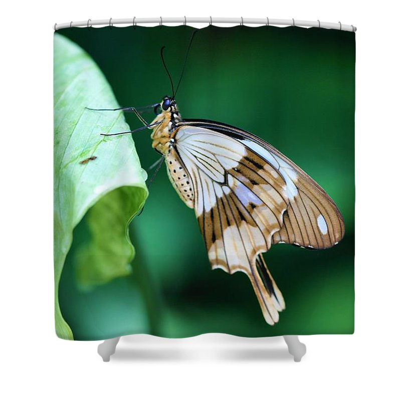 Giant Swallowtail Shower Curtain featuring the photograph Giant Swallowtail by Kristina Jones