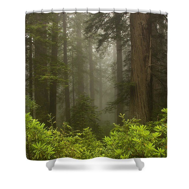 Redwood Shower Curtain featuring the photograph Giants In The Mist by Mike Dawson