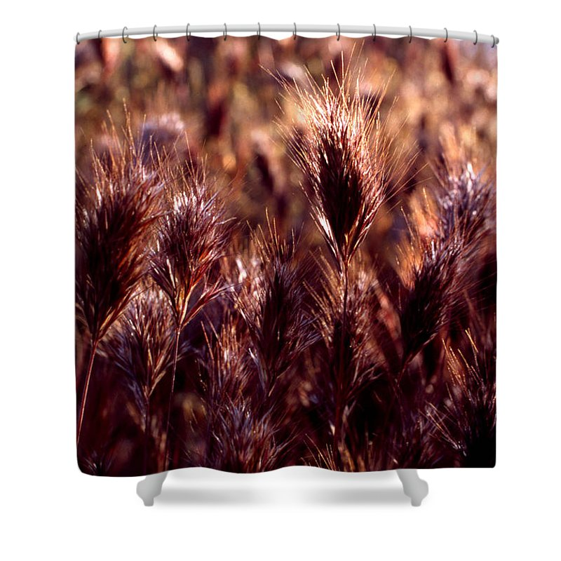 Nature Shower Curtain featuring the photograph Gideon by Randy Oberg