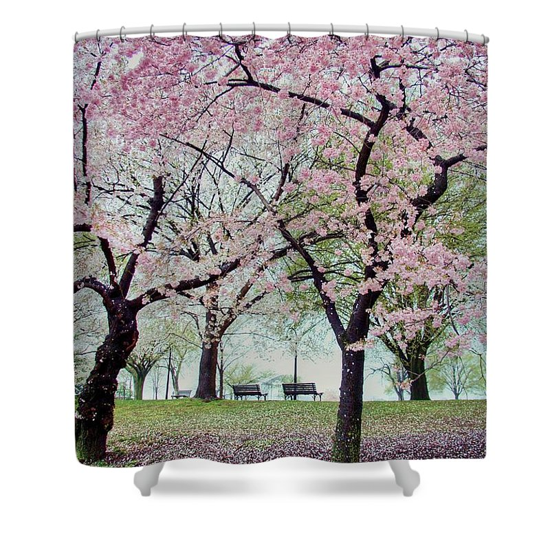 Cherry Blossoms Shower Curtain featuring the photograph Gifts by Mitch Cat