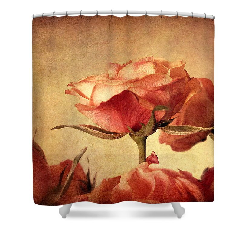 Flowers Shower Curtain featuring the photograph Gilded Roses by Jessica Jenney
