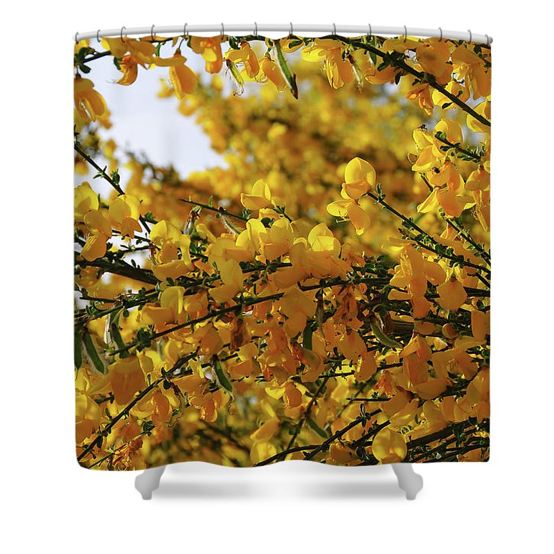 Ginestra Shower Curtain featuring the photograph Ginestre by Ilaria Andreucci