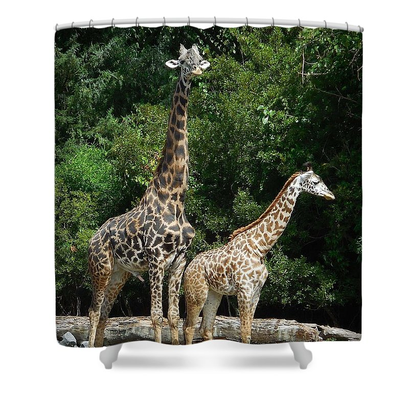 Giraffe Shower Curtain featuring the photograph Giraffe, Male And Female by Captain Debbie Ritter