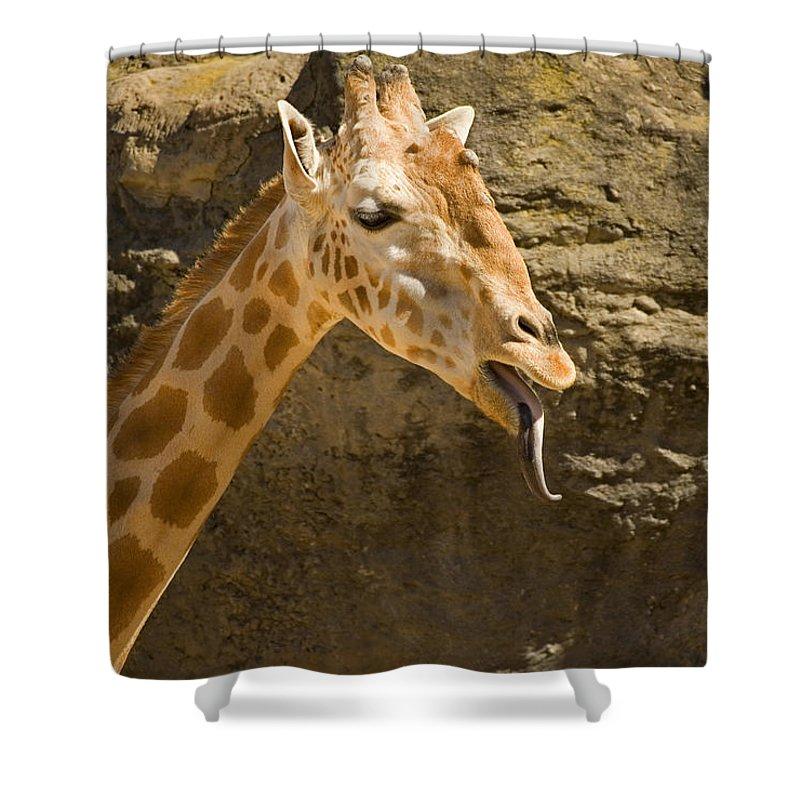 Giraffe Shower Curtain featuring the photograph Giraffe Raspberry by Mike Dawson