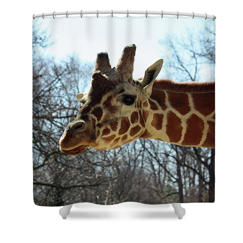 Maryland Shower Curtain featuring the photograph Giraffe Stretching For A View by Ronald Reid