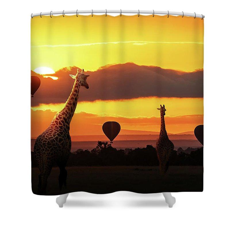 Giraffe Shower Curtain featuring the photograph Giraffe Walking Into Sunrise In Africa by Susan Schmitz  sc 1 st  Fine Art America & Giraffe Walking Into Sunrise In Africa Shower Curtain for Sale by ...