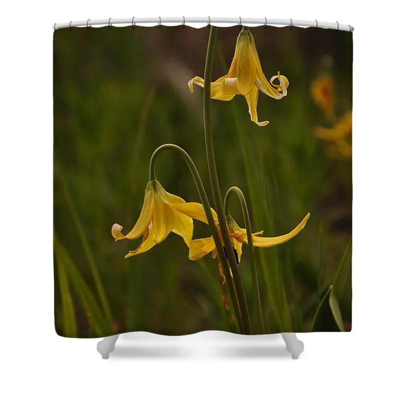 Yellowstone National Park Shower Curtain featuring the photograph Glacier Lilly by Frank Madia