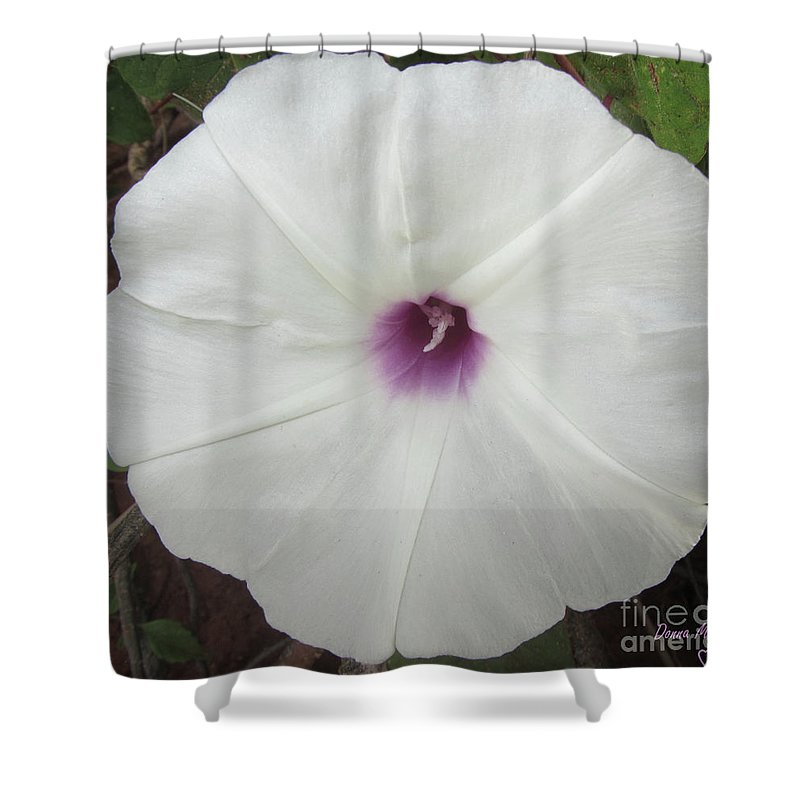 Flower Shower Curtain featuring the photograph Glad Morning Vines by Donna Brown