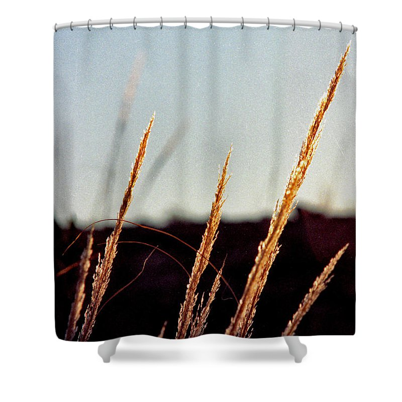 Grass Shower Curtain featuring the photograph Glistening Grass by Randy Oberg