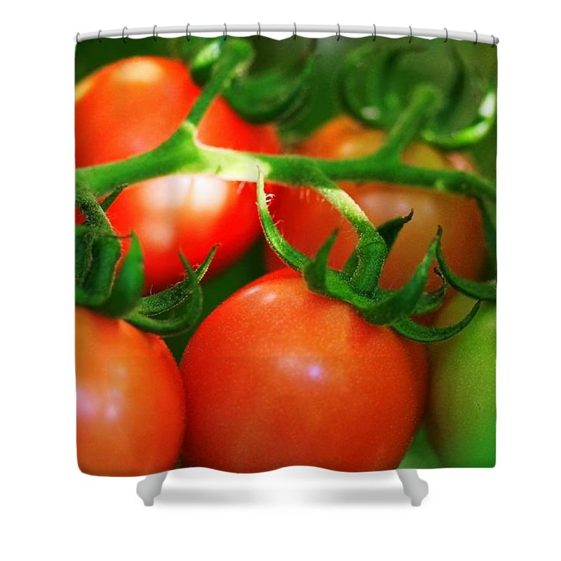 Tomato Shower Curtain featuring the photograph Glory Of Gardening by Mitch Cat