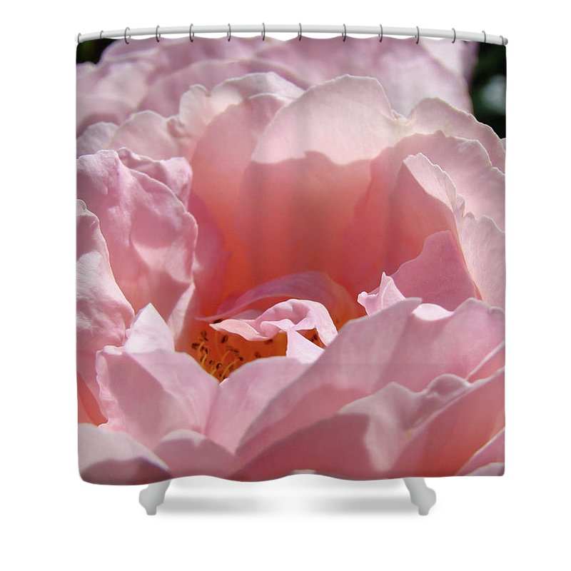 Rose Shower Curtain featuring the photograph Glowing Pink Rose Flower Giclee Prints Baslee Troutman by Baslee Troutman