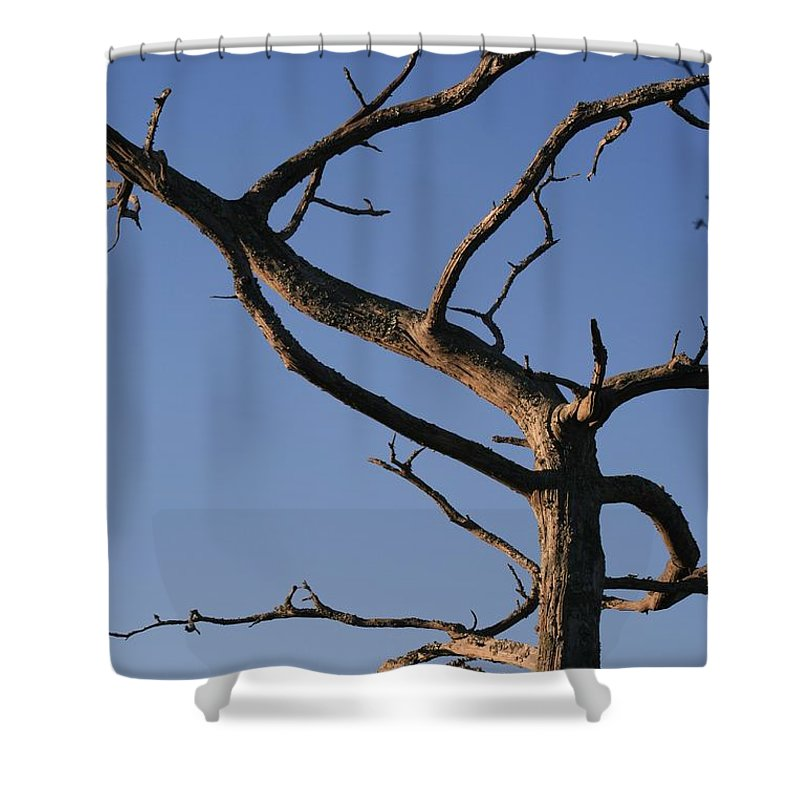 Tree Shower Curtain featuring the photograph Gnarly Tree by Nadine Rippelmeyer