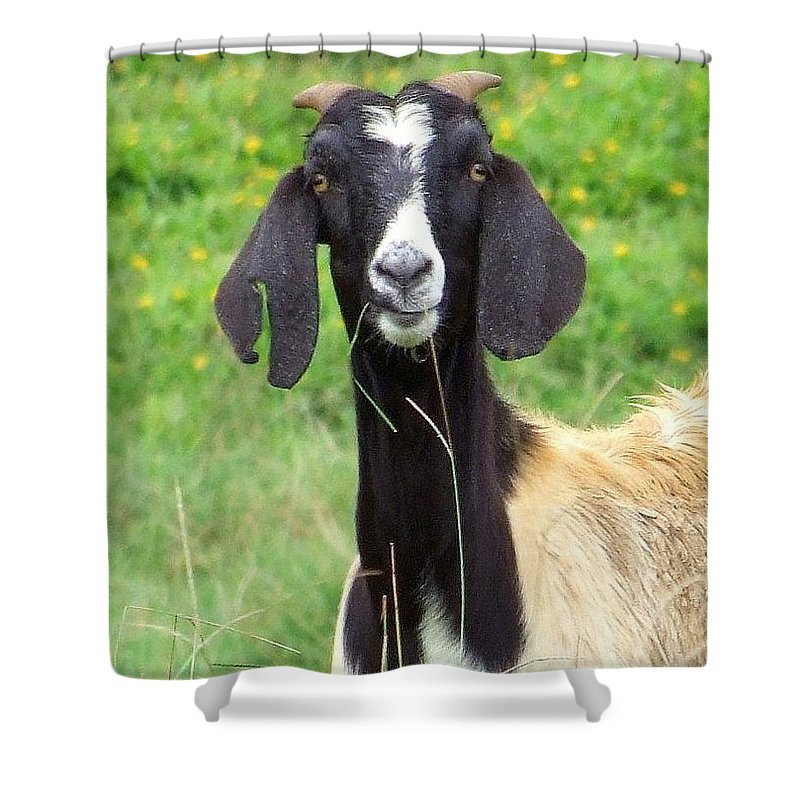 Black Shower Curtain featuring the photograph Goat Dental Floss by Mary Deal