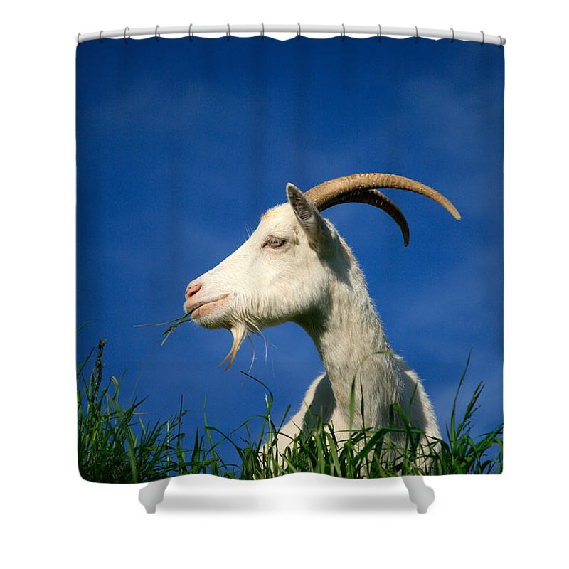 Animals Shower Curtain featuring the photograph Goat by Gaspar Avila