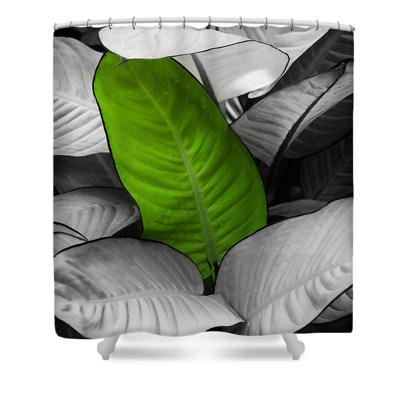Leaf Shower Curtain featuring the photograph Going Green - Dreamy by Marilyn Hunt