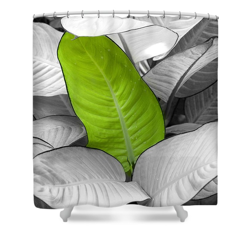Leaf Shower Curtain featuring the photograph Going Green Lighter by Marilyn Hunt