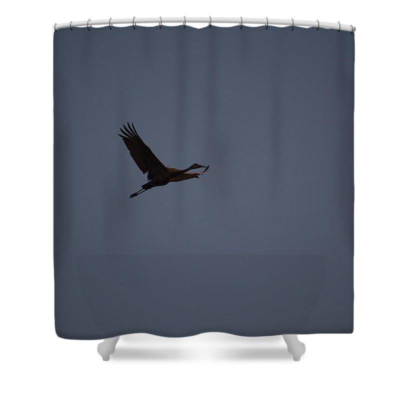 Sandhill Crane Shower Curtain featuring the photograph Going Up by Linda Kerkau