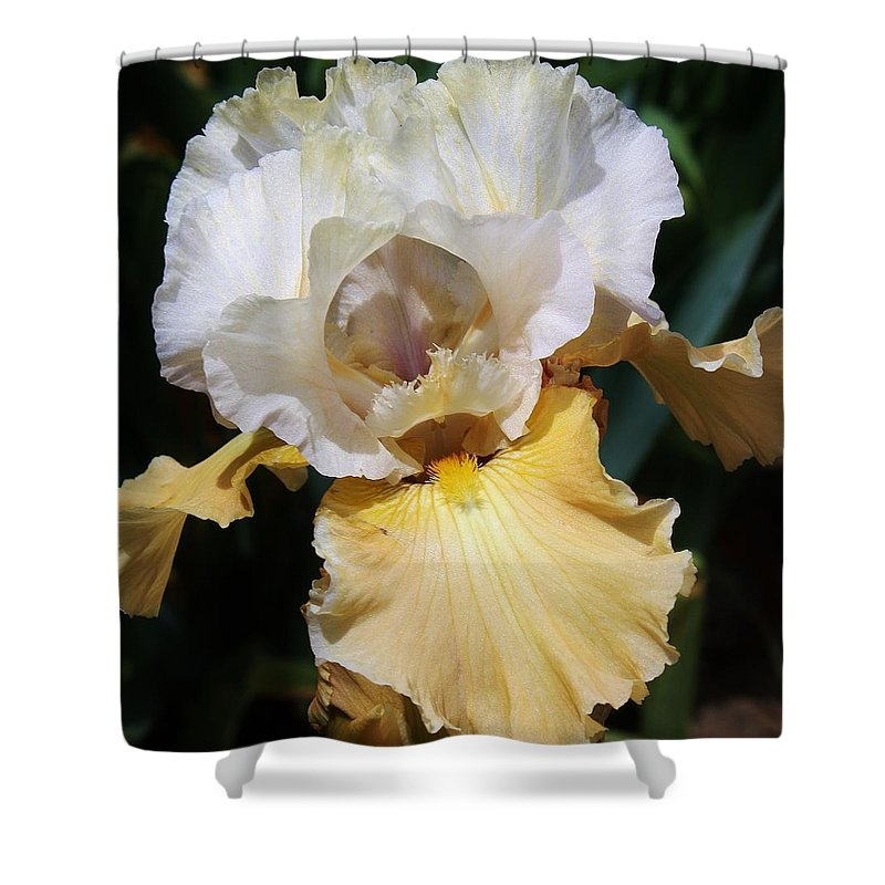 Flora Shower Curtain featuring the photograph Gold And White Iris by Bruce Bley