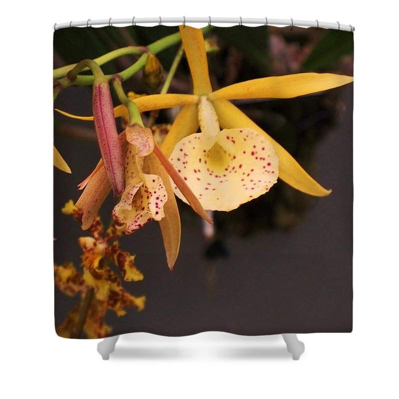 Gold Shower Curtain featuring the photograph Gold Yellow Orchid by Eric Schiabor