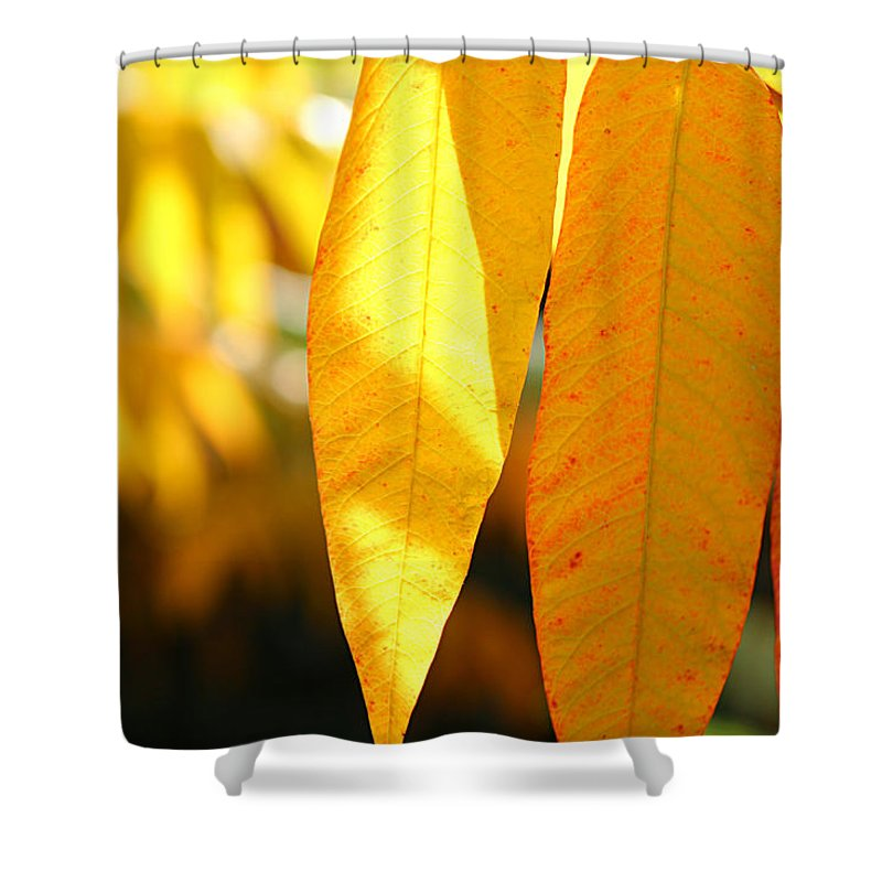 Maple Leave Shower Curtain featuring the photograph Golden Accent by Loretta S