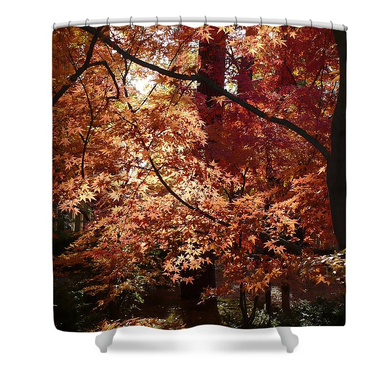 Autumn Shower Curtain featuring the photograph Golden Autumn Sunshine by Carol Groenen