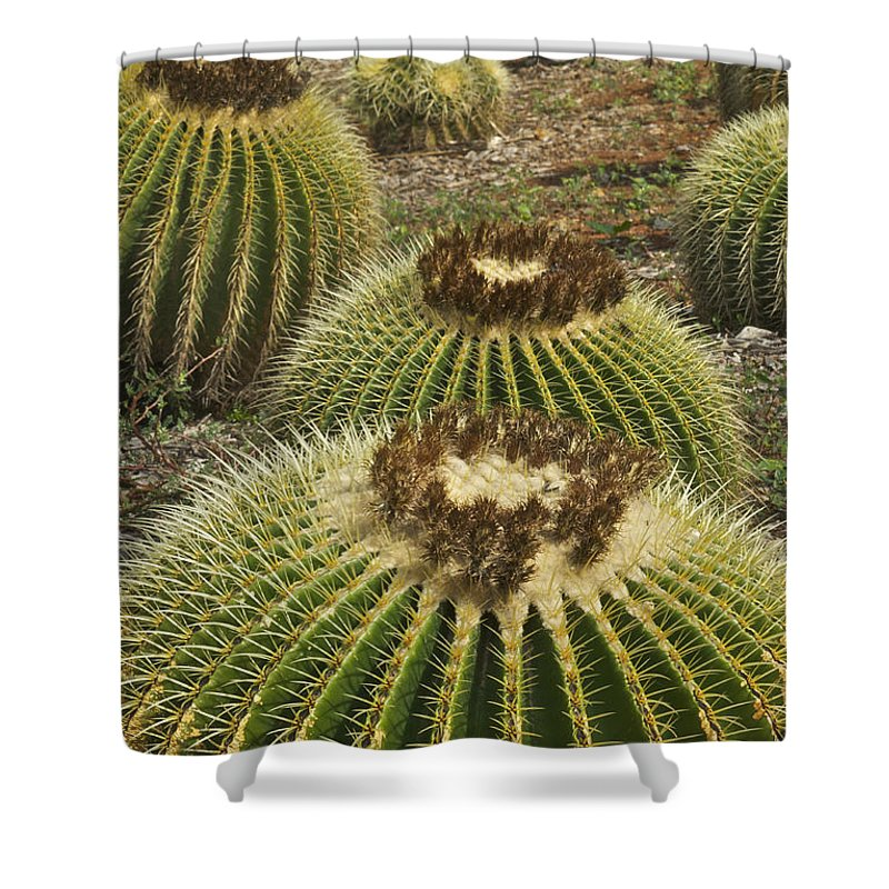 Landscape Shower Curtain featuring the photograph Golden Barrel by Michael Peychich