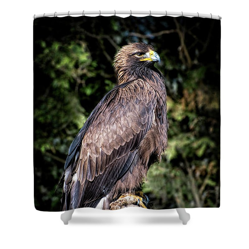 Eagle Shower Curtain featuring the digital art Golden Boy by Anita Hubbard